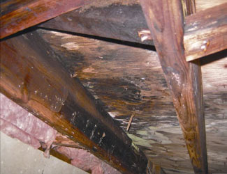 mold and rot in a Brandon  crawl space